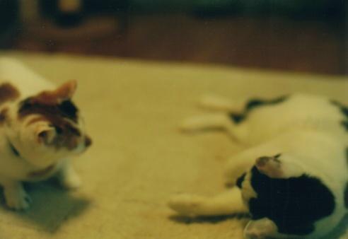 Cat_0606_172