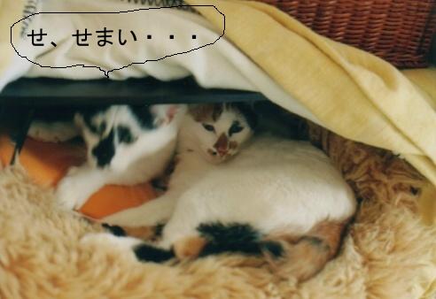 Cat_0606_173