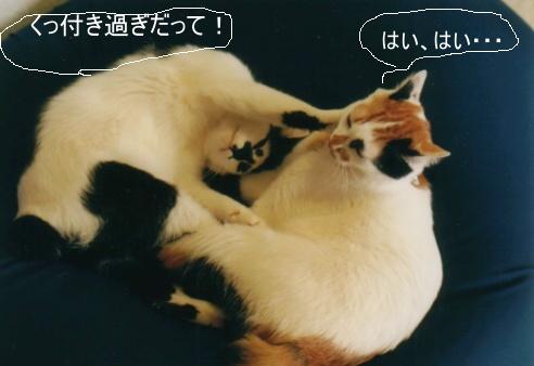 Cat_0606_174