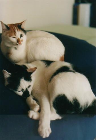 Cat_0606_175