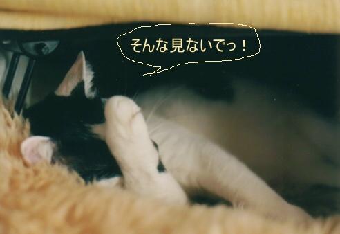 Cat_0606_253