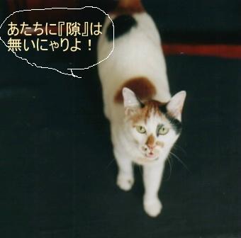 Cat_0607_041