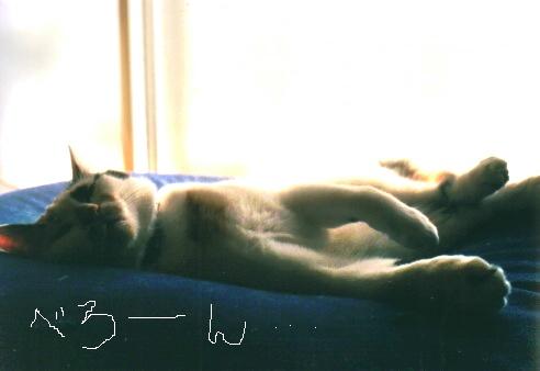 Cat_0607_042