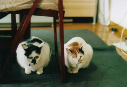 Cat_0607_171