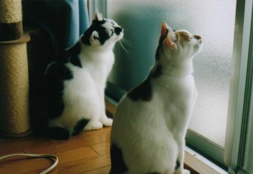 Cat_0607_172