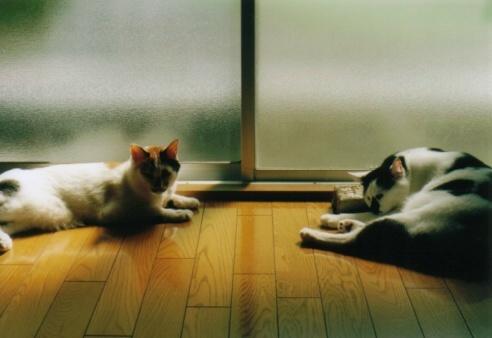 Cat_0607_173