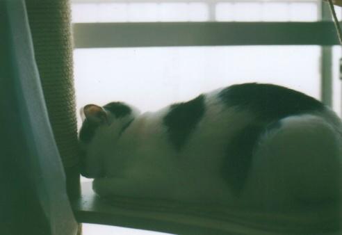 Cat_0607_243