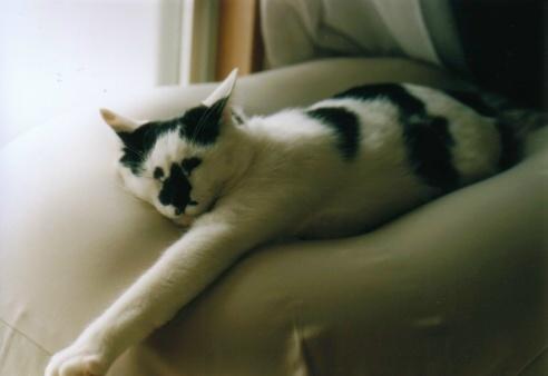 Cat_0607_244