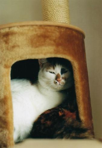 Cat_0607_292