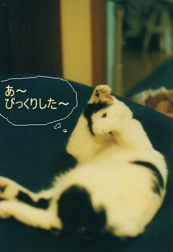 Cat_0607_293