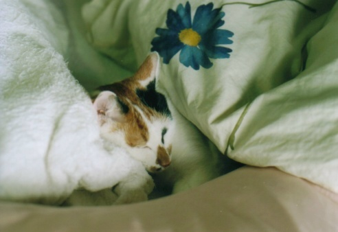 Cat_0610_062