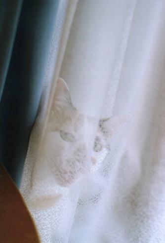 Cat_0610_143